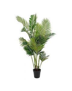 Areca Palme - 175cm