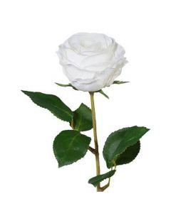 Rose 45cm - Hvid